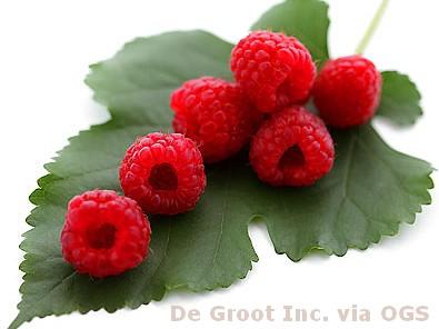 Rubus 'Heritage'