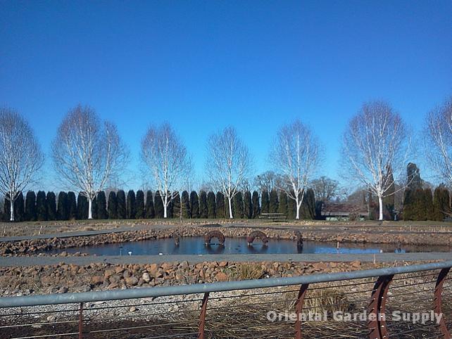 Oregon Garden 2014-02-05 13.04.04