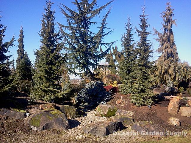 Oregon Garden 2014-02-05 13.17.42