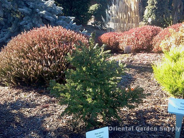 Oregon Garden 2014-02-05 13.18.51