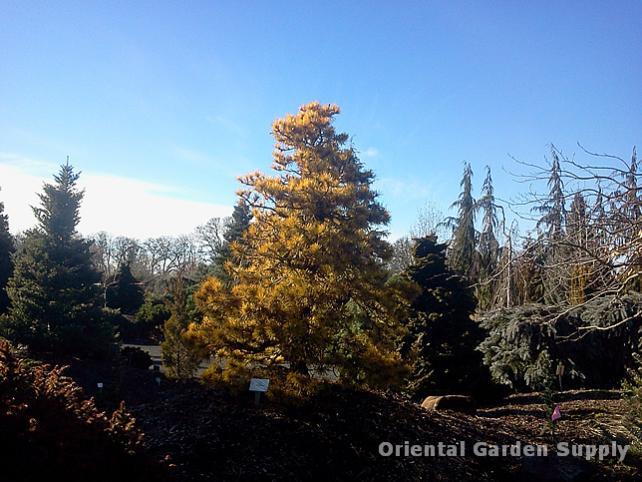 Oregon Garden 2014-02-05 13.30.40