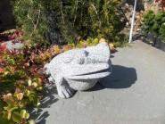 Granite Toad