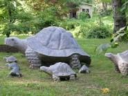Turtle SA an-tu_galapagos.jpg