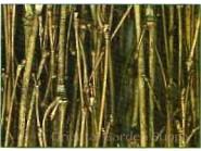 Twig Fencing