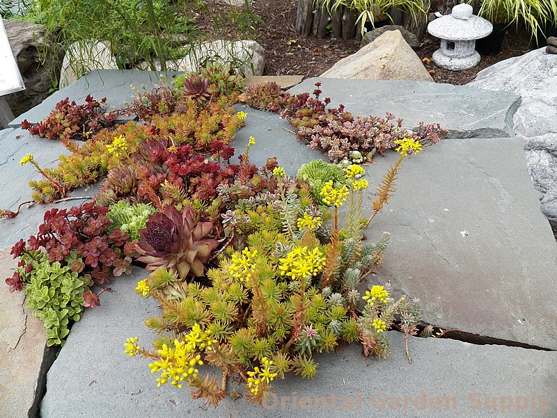 Custom-Slate Sedum Table