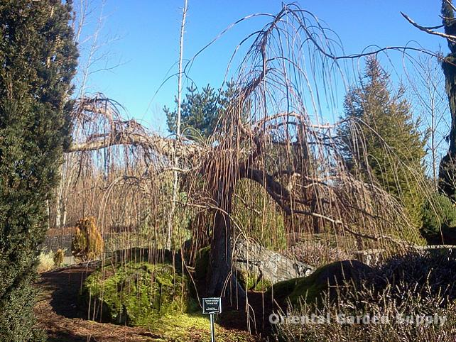 Oregon Garden 2014-02-05 13.09.11