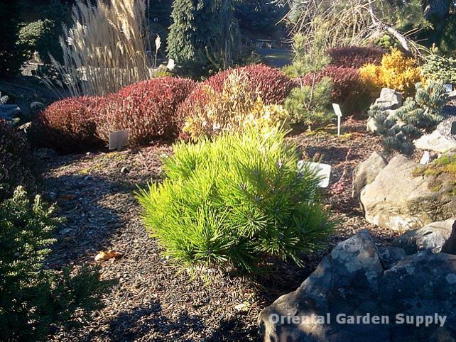 Oregon Garden 2014-02-05 13.18.55