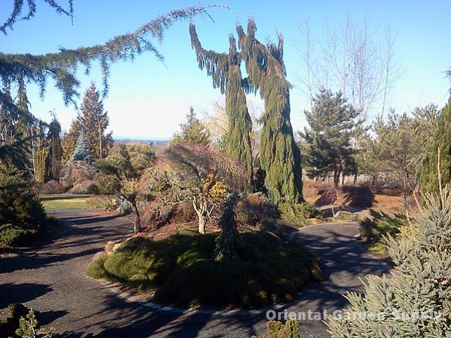 Oregon Garden 2014-02-05 13.19.56