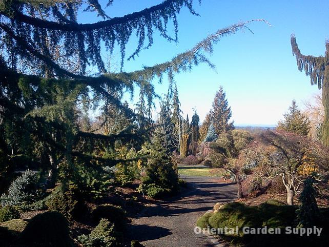 Oregon Garden 2014-02-05 13.20.02