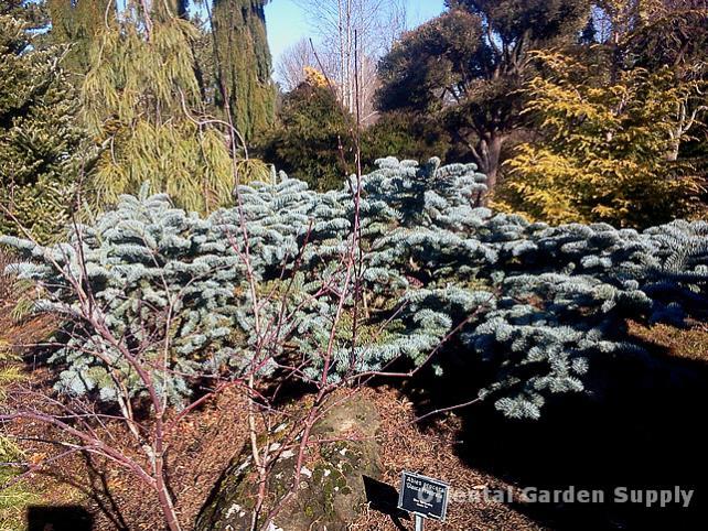 Oregon Garden 2014-02-05 13.24.17