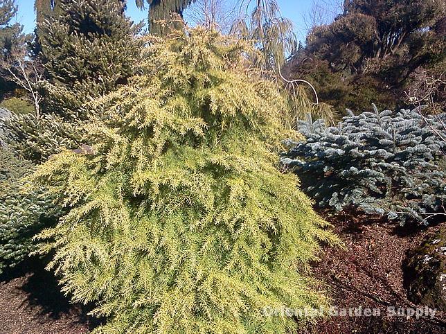 Oregon Garden 2014-02-05 13.24.24