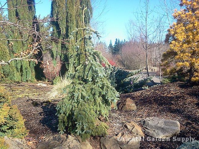 Oregon Garden 2014-02-05 13.27.25