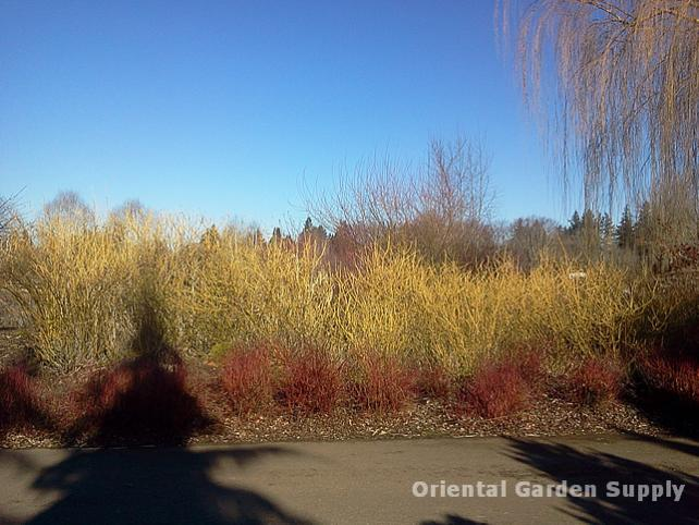 Oregon Garden 2014-02-05 13.34.51